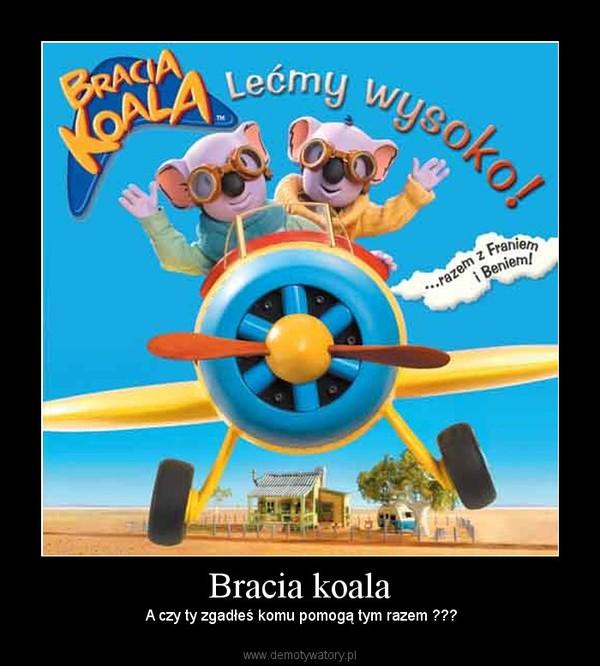 Bracia koala –  A czy ty zgadłeś komu pomogą tym razem ???