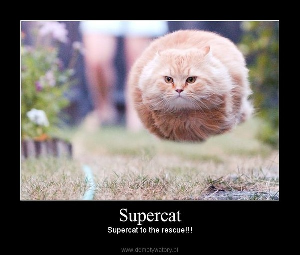 Supercat – Supercat to the rescue!!!