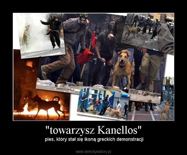 """""""towarzysz Kanellos"""" –  pies, który stał się ikoną greckich demonstracji"""