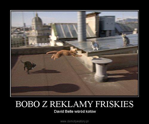 BOBO Z REKLAMY FRISKIES