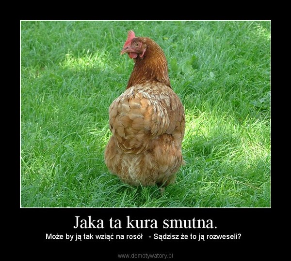 Jaka ta kura smutna. – Może by ją tak wziąć na rosół   - Sądzisz że to ją rozweseli?