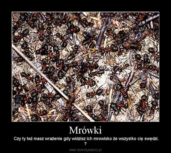 Mrówki –  Czy ty też masz wrażenie gdy widzisz ich mrowisko że wszystko cię swędzi.?