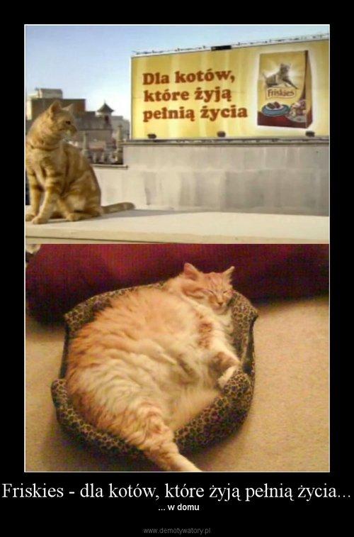 Friskies - dla kotów, które żyją pełnią życia...
