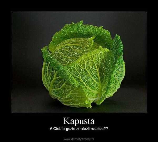 Kapusta – A Ciebie gdzie znaleźli rodzice??