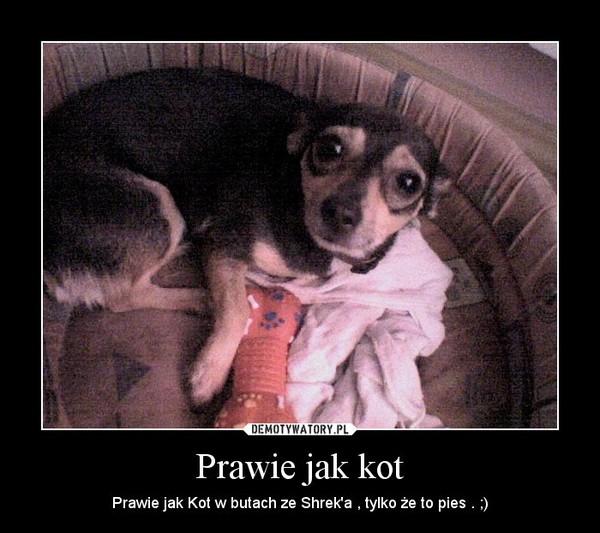 Prawie jak kot – Prawie jak Kot w butach ze Shrek'a , tylko że to pies . ;)