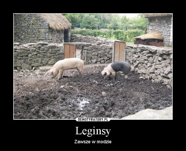 Leginsy – Zawsze w modzie