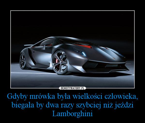 Gdyby mrówka była wielkości człowieka, biegała by dwa razy szybciej niż jeździ Lamborghini –