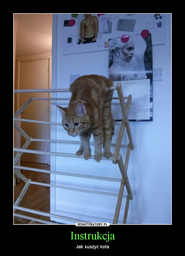 Instrukcja – Jak suszyć kota