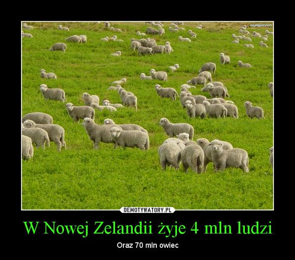 W Nowej Zelandii żyje 4 mln ludzi – Oraz 70 mln owiec