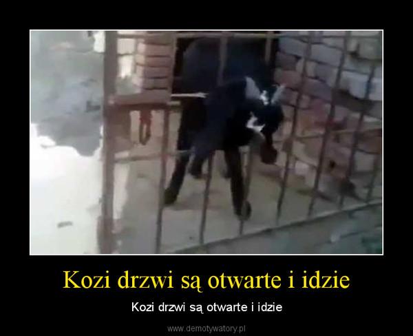 Kozi drzwi są otwarte i idzie – Kozi drzwi są otwarte i idzie
