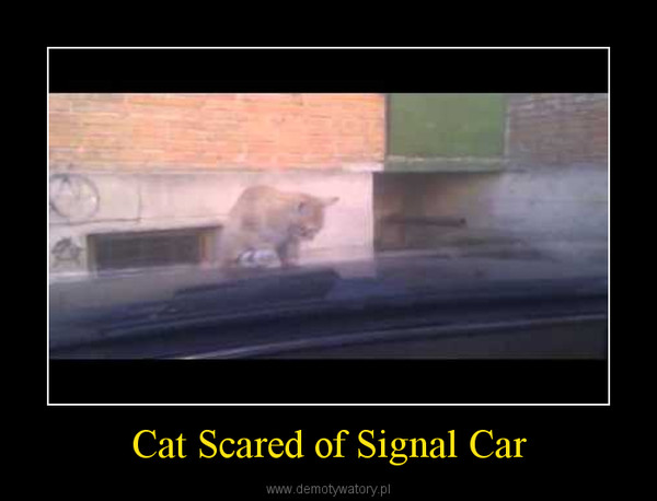 Cat Scared of Signal Car –