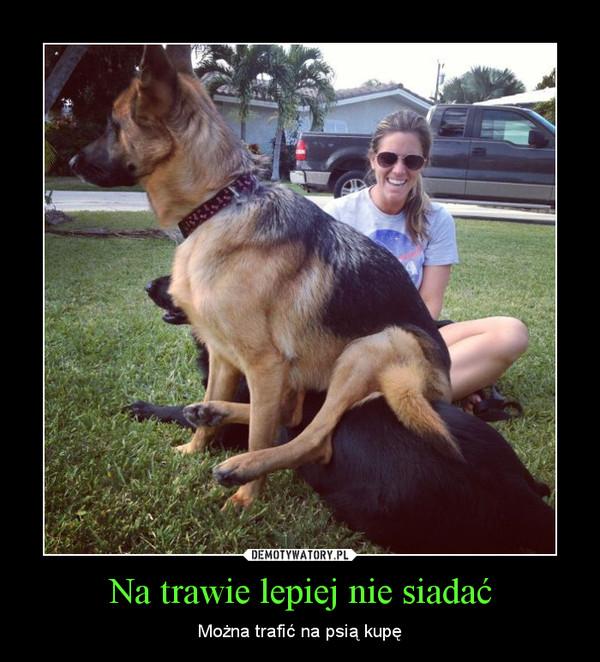 Na trawie lepiej nie siadać – Można trafić na psią kupę