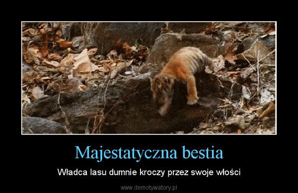 Majestatyczna bestia – Władca lasu dumnie kroczy przez swoje włości