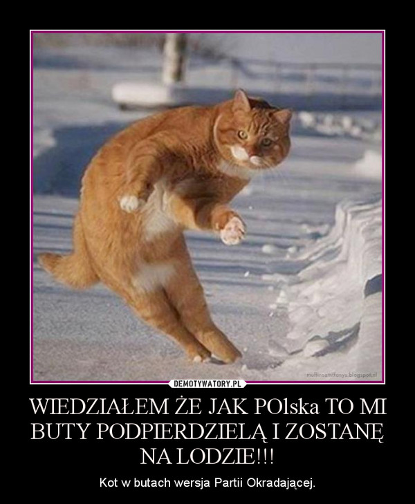 WIEDZIAŁEM ŻE JAK POlska TO MI BUTY PODPIERDZIELĄ I ZOSTANĘ NA LODZIE!!! – Kot w butach wersja Partii Okradającej.
