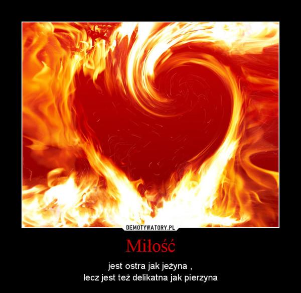 Miłość – jest ostra jak jeżyna ,lecz jest też delikatna jak pierzyna
