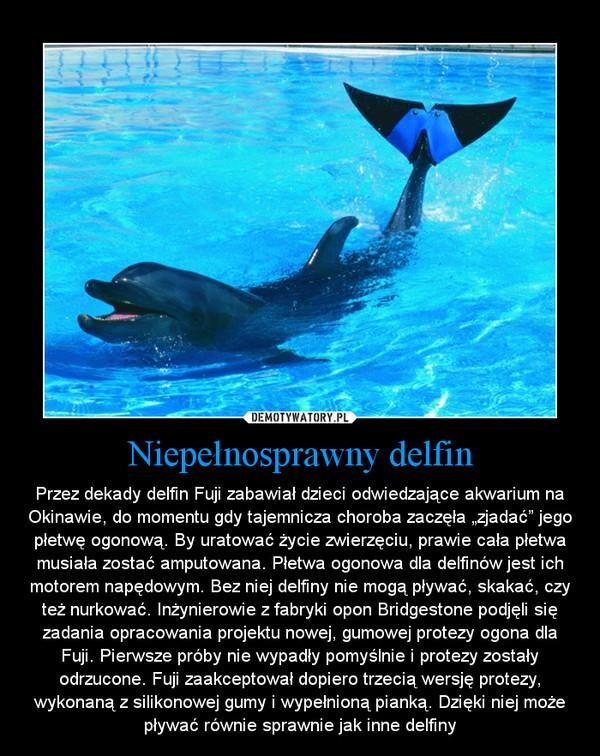 """Niepełnosprawny delfin – Przez dekady delfin Fuji zabawiał dzieci odwiedzające akwarium na Okinawie, do momentu gdy tajemnicza choroba zaczęła """"zjadać"""" jego płetwę ogonową. By uratować życie zwierzęciu, prawie cała płetwa musiała zostać amputowana. Płetwa ogonowa dla delfinów jest ich motorem napędowym. Bez niej delfiny nie mogą pływać, skakać, czy też nurkować. Inżynierowie z fabryki opon Bridgestone podjęli się zadania opracowania projektu nowej, gumowej protezy ogona dla Fuji. Pierwsze próby nie wypadły pomyślnie i protezy zostały odrzucone. Fuji zaakceptował dopiero trzecią wersję protezy, wykonaną z silikonowej gumy i wypełnioną pianką. Dzięki niej może pływać równie sprawnie jak inne delfiny"""