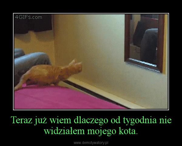 Teraz już wiem dlaczego od tygodnia nie widziałem mojego kota. –