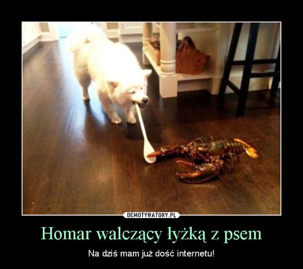 Homar walczący łyżką z psem – Na dziś mam już dość internetu!
