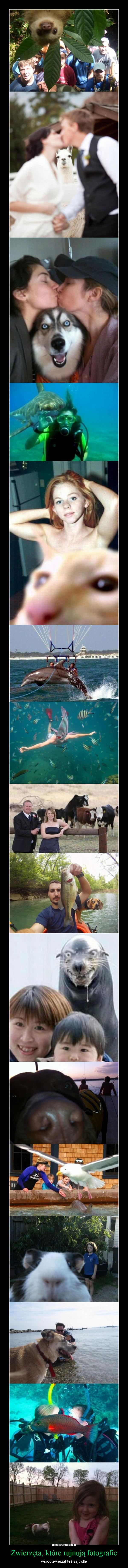 Zwierzęta, które rujnują fotografie – wśród zwierząt też są trolle