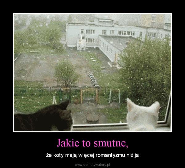 Jakie to smutne, – że koty mają więcej romantyzmu niż ja