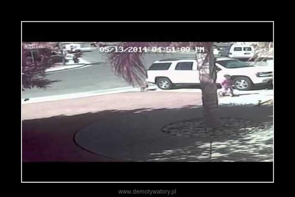 Kot ratuje chłopca przed atakiem psa –