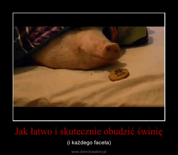 Jak łatwo i skutecznie obudzić świnię – (i każdego faceta)