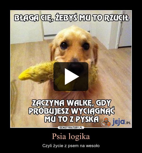 Psia logika – Czyli życie z psem na wesoło