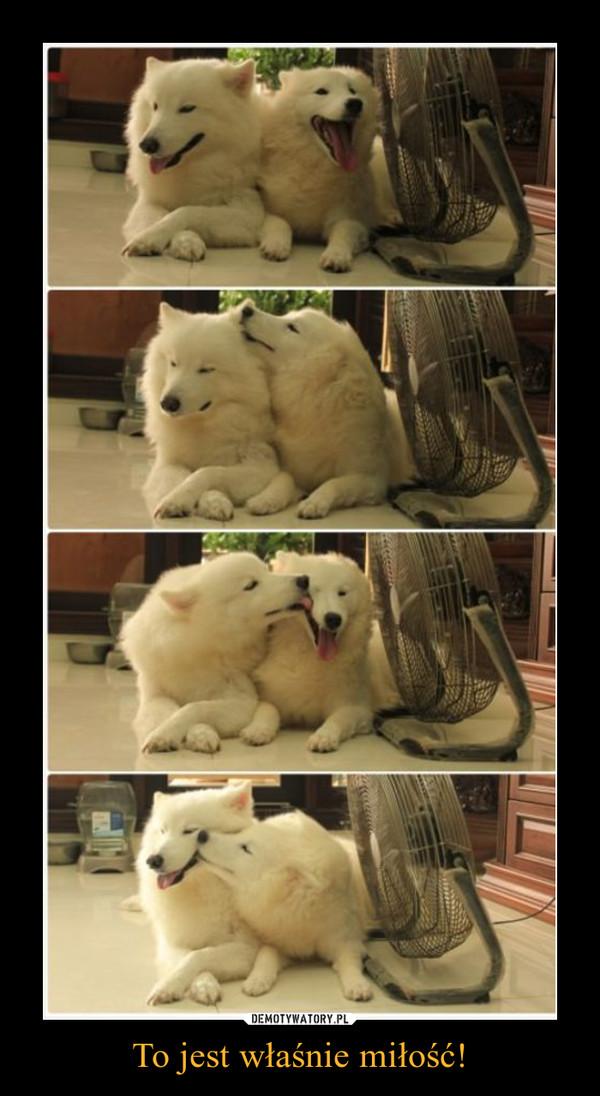 To jest właśnie miłość! –