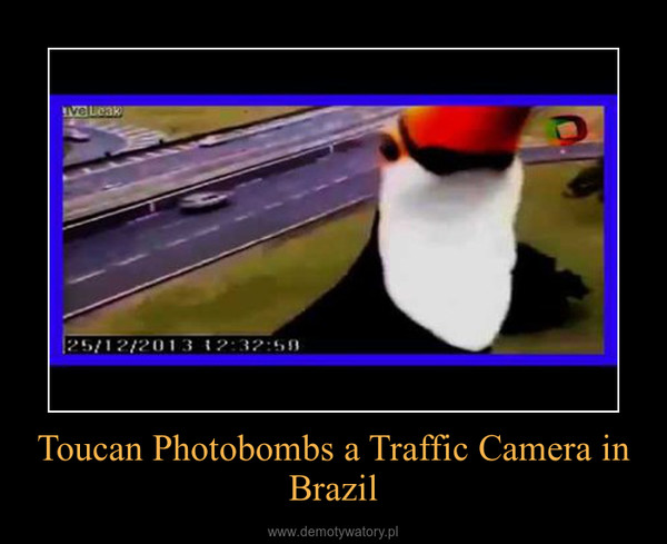 Toucan Photobombs a Traffic Camera in Brazil –