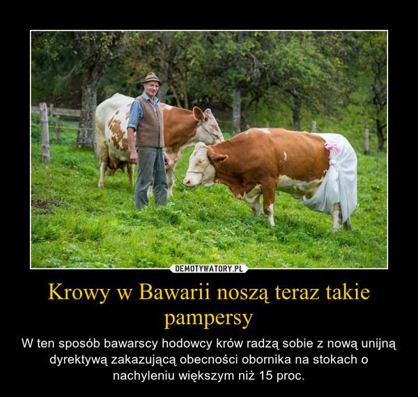 Krowy w Bawarii noszą teraz takie pampersy – W ten sposób bawarscy hodowcy krów radzą sobie z nową unijną dyrektywą zakazującą obecności obornika na stokach o nachyleniu większym niż 15 proc.