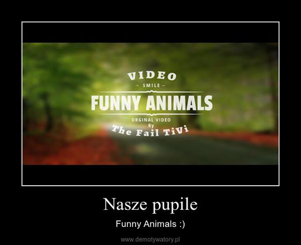 Nasze pupile – Funny Animals :)