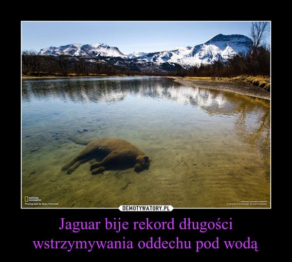Jaguar bije rekord długości wstrzymywania oddechu pod wodą –