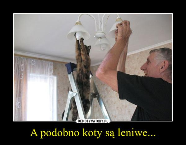 A podobno koty są leniwe... –