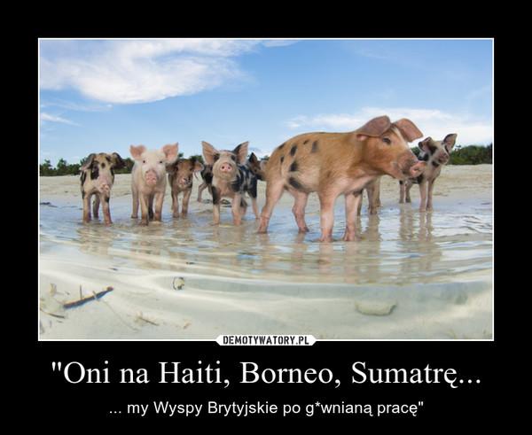 """""""Oni na Haiti, Borneo, Sumatrę... – ... my Wyspy Brytyjskie po g*wnianą pracę"""""""