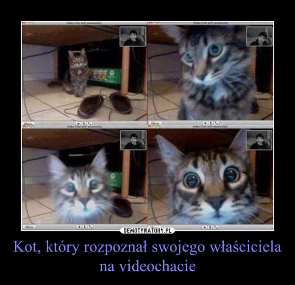 Kot, który rozpoznał swojego właściciela na videochacie –