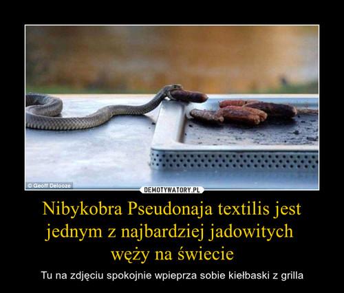 Nibykobra Pseudonaja textilis jest jednym z najbardziej jadowitych  węży na świecie