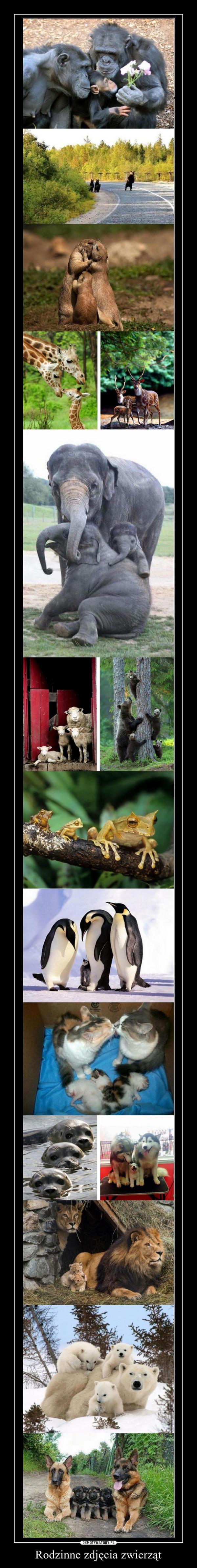 Rodzinne zdjęcia zwierząt –