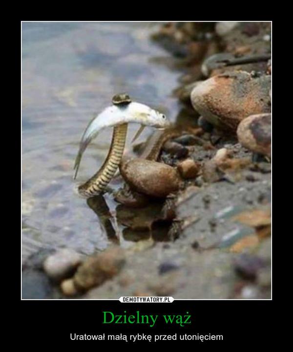 Dzielny wąż – Uratował małą rybkę przed utonięciem
