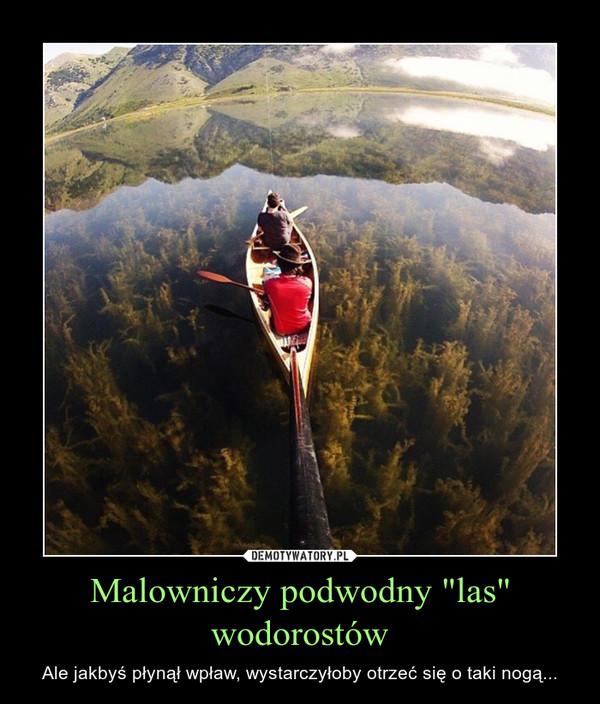 """Malowniczy podwodny """"las"""" wodorostów – Ale jakbyś płynął wpław, wystarczyłoby otrzeć się o taki nogą..."""