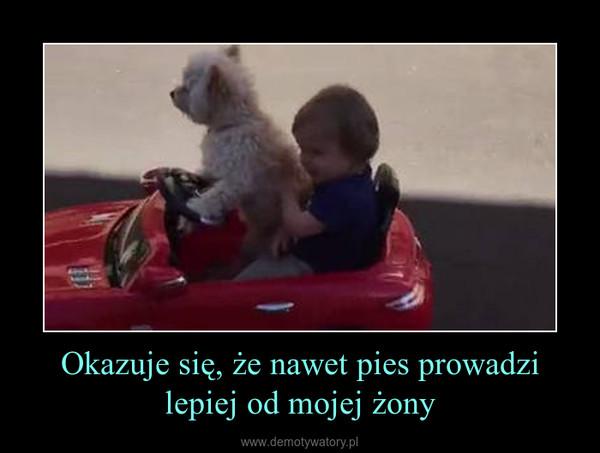 Okazuje się, że nawet pies prowadzi lepiej od mojej żony –