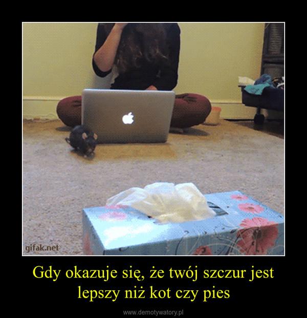 Gdy okazuje się, że twój szczur jest lepszy niż kot czy pies –