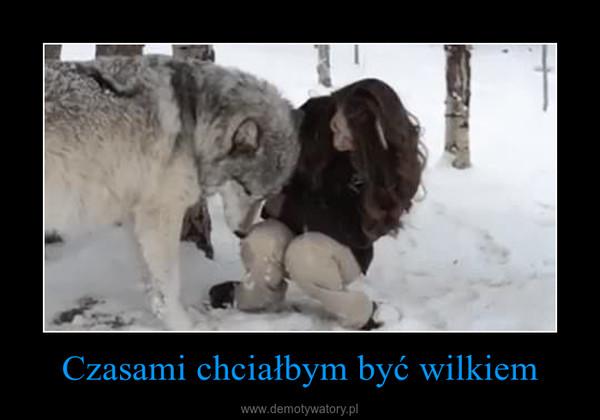 Czasami chciałbym być wilkiem –