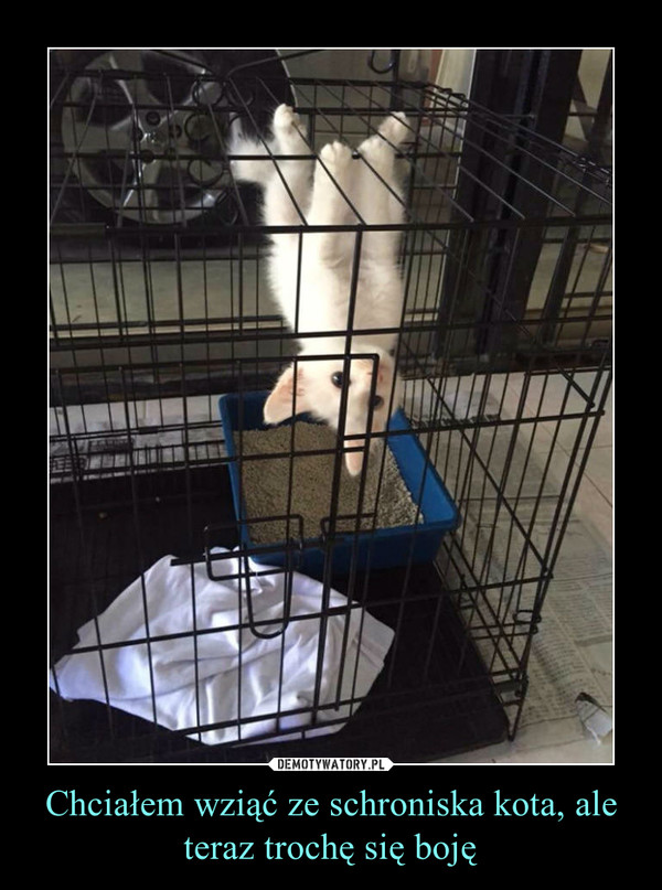 Chciałem wziąć ze schroniska kota, ale teraz trochę się boję –