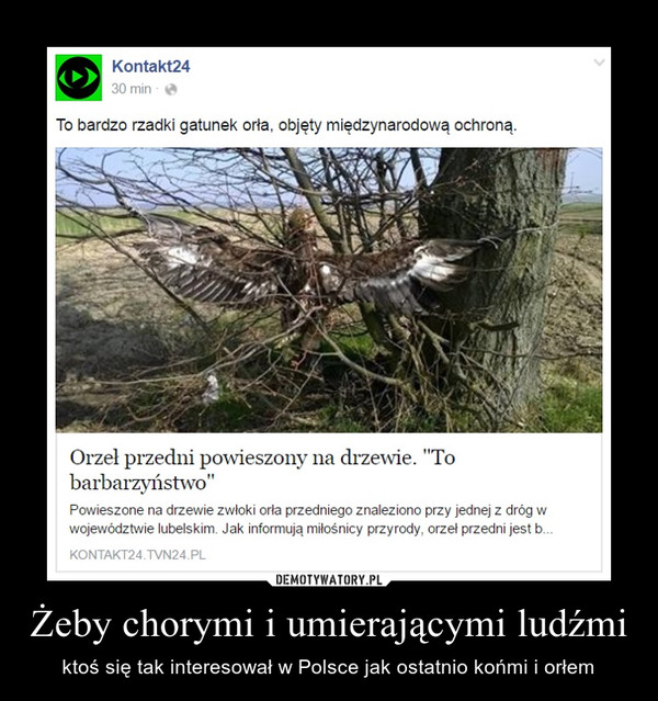 Żeby chorymi i umierającymi ludźmi – ktoś się tak interesował w Polsce jak ostatnio końmi i orłem