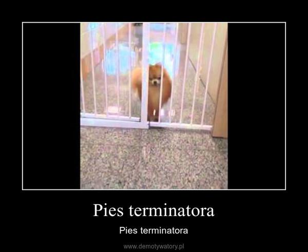 Pies terminatora – Pies terminatora