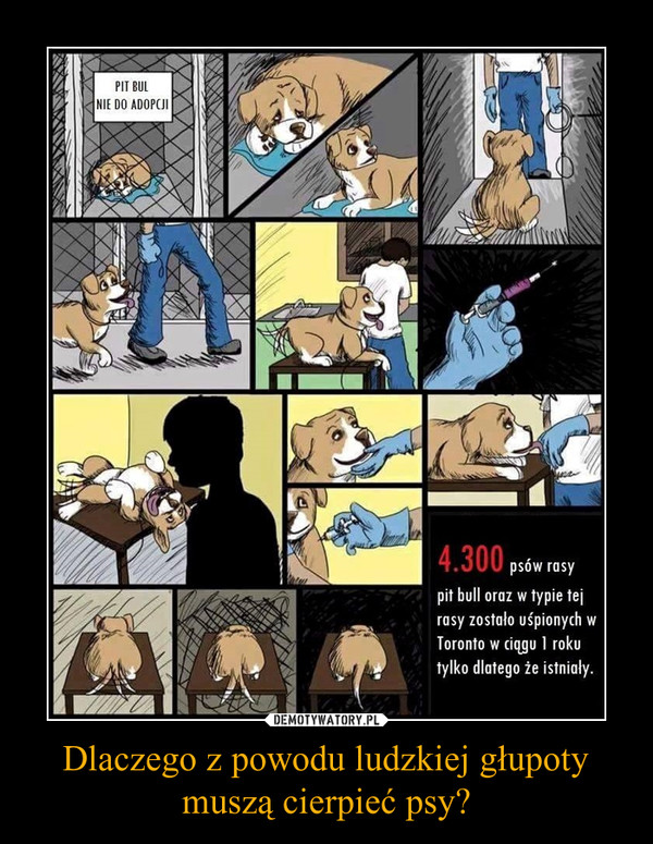Dlaczego z powodu ludzkiej głupoty muszą cierpieć psy? –