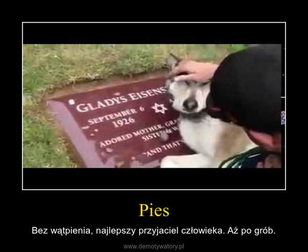 Pies – Bez wątpienia, najlepszy przyjaciel człowieka. Aż po grób.