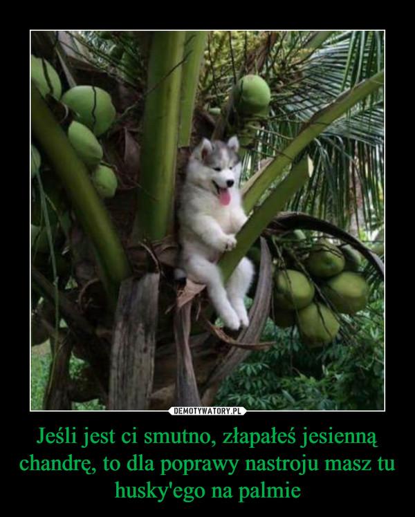 Jeśli jest ci smutno, złapałeś jesienną chandrę, to dla poprawy nastroju masz tu husky'ego na palmie –