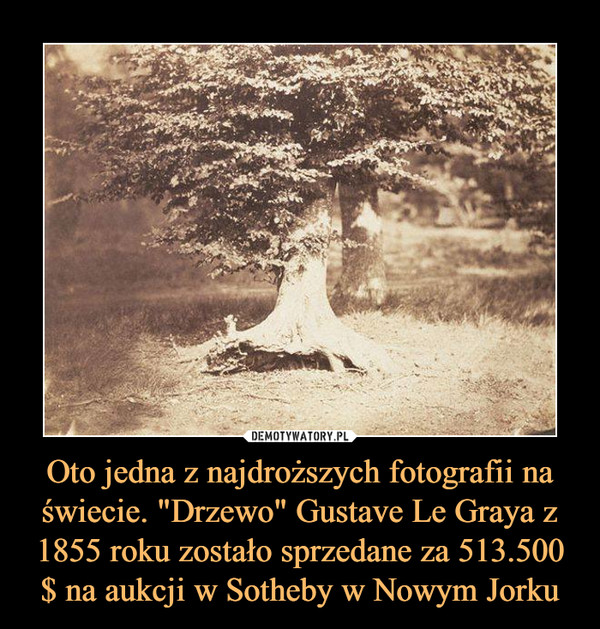 """Oto jedna z najdroższych fotografii na świecie. """"Drzewo"""" Gustave Le Graya z 1855 roku zostało sprzedane za 513.500 $ na aukcji w Sotheby w Nowym Jorku –"""