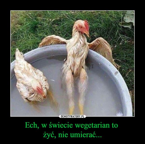 Ech, w świecie wegetarian to żyć, nie umierać... –